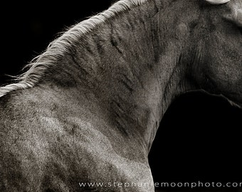 Black and White Horse Photography, Fine Art Horse Photograph, Abstract Horse Photography, Horse Picture, Horse Poster