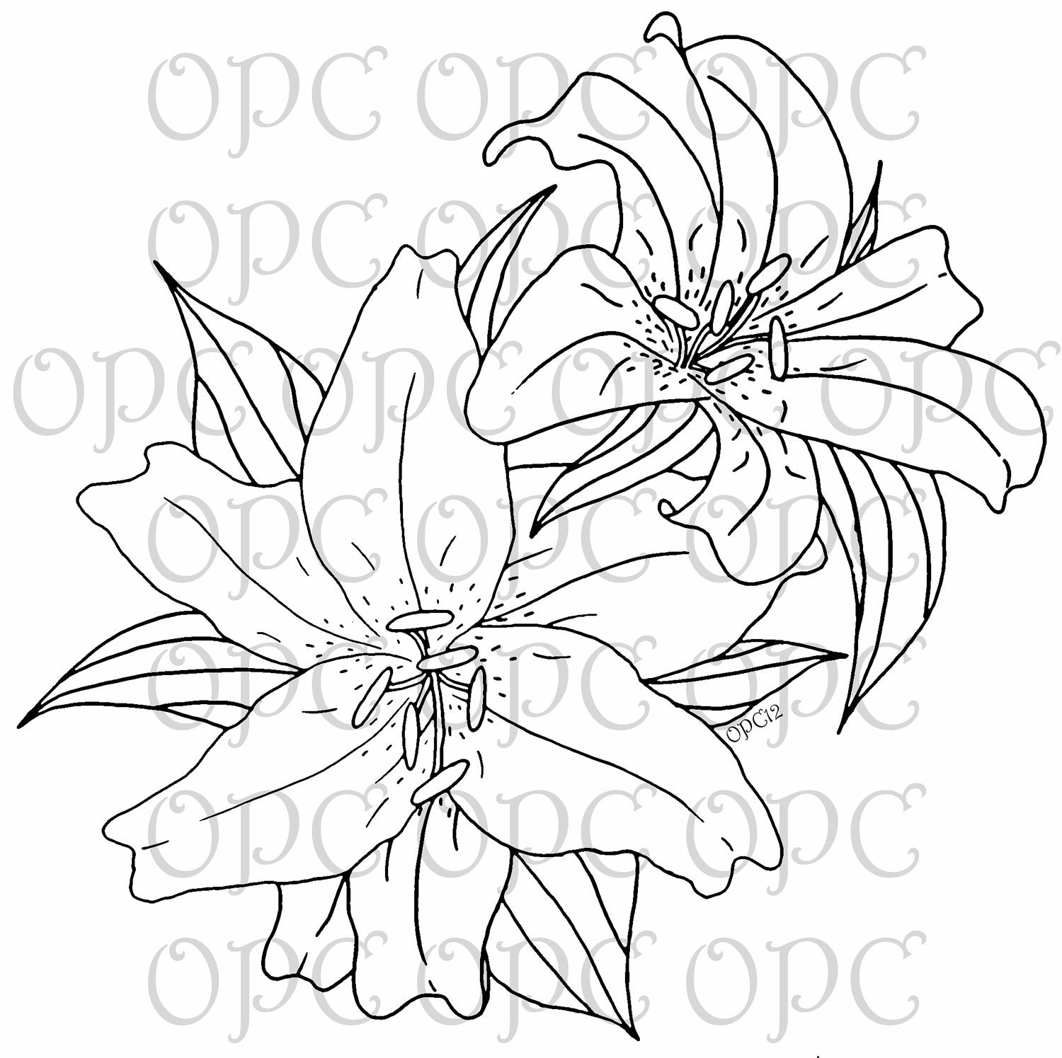 Lily Tattoo Line Drawing : Digital stamp stargazer lilies