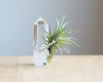 PREORDER, Airplant on Crystal Point, Gift Under 20, Unique Air Plant Display, Gift For Friend, Gardener, Spiritual Gift, Tillandsia Lover