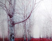 Gray, Red, Forest Print, Surreal, Spooky, Fall, Nature Photography, Dark, Gothic, Fairy Tale, Wall Art