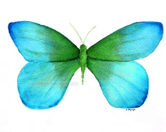 watercolor  painting blue green butterfly archival print