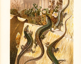 1890 Antique LIZARD fine chromolithograph, beautiful wall LIZARDS sunbathing on a romantic scenery