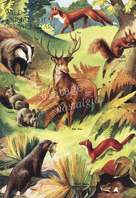 1940s Fall Colors Red Deer, Fox, Squirrel, Rabbit British Animals vintage illustration, Autumn decor,