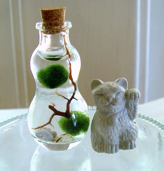 Tiny Kitten Micro Marimo Moss Ball Gourd Bottle Terrarium with Lucky Cat