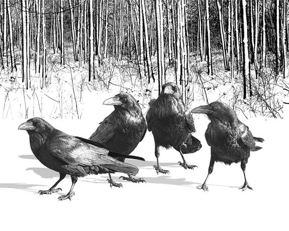 Black Gothic Ravens in the Snow at the Edge of the Woods in Winter No.14H2 A Black and White Fine Art Surreal Fantasy Bird Photograph