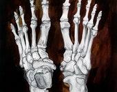"Metatarsals - 15"" x 18"" - Original Bone Study"