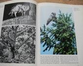 Owls, A Natural History