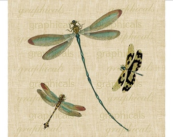 Teal aqua dragonflies insects Instant graphic download image for paper transfer for iron on fabric burlap pillow decoupage crafts No. 1746