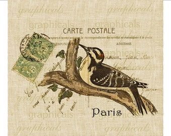 Paris Carte Postale Bird instant Digital Download graphic image for iron on fabric transfer burlap decoupage pillows tote bags cards No. 673