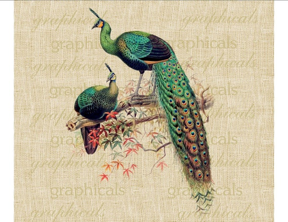 Peacock pair Green birds Instant digital download image Colorful leaves for transfer to fabric paper burlap pillows tote bags tag  No. 541