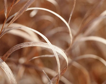 November Grass Fine Art Photography Print, Brown Autumn Grass