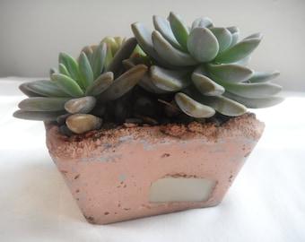 Imperial living succulent arrangement