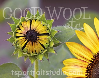 sunflowers greeting cards - set of 10