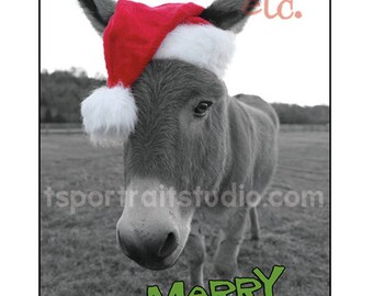donkey christmas card - merry christmASS greeting cards - set of 10