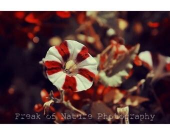 Fine Art Photography Digital Download Bright Red Bokeh Spring Summer Flower Printable Art Photo Photograph