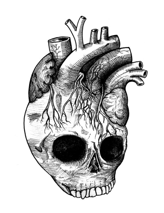 Detailed Anatomical Heart Skull Black and White by iiixtheory