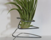 Metal Stand with Air Plant