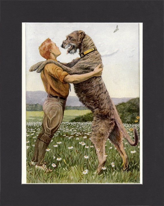 Irish Wolfhound 1919 Vintage Dog Print by Louis Agassiz Fuertes Painting Print Mounted with Mat  Irish Wolfhound Print