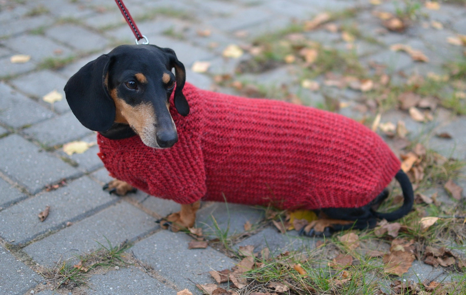 Knitting Patterns For Dachshund Dog Sweaters : Dog jumper Dachshund clothes Dog Sweater Dachshund sweater