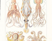 1912 Animal Print - Octopods and Decapods - Vintage Antique Home Decor Book Plate Art Illustration for Framing 100 Years Old