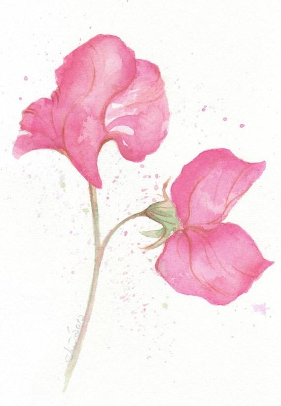 Flower, flower print, art, wall art, giclee art, watercolor giclee, watercolor art print, Pink Sweet Pea, original watercolor print