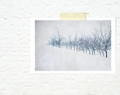 winter photograph minimalist art tree nature print home decor white cool blue - L'hiver - JaneRovers