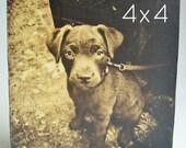 Custom Pet Portrait, Pet Art, Wood Block, Gift for Dog Lover, 4x4