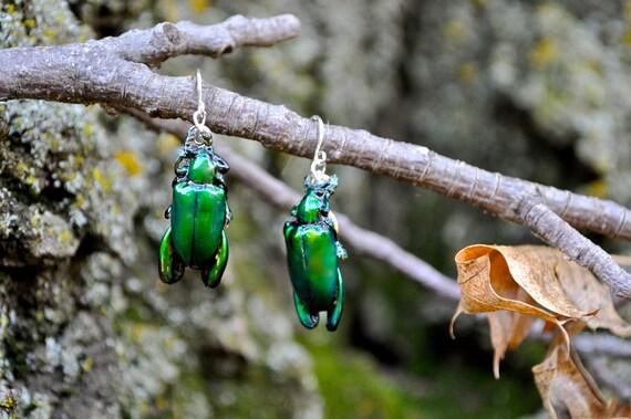 Floating Real Green Frog Beetle Earrings similar to Moonrise Kingdom