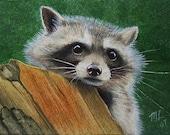 Raccoon Miniature Art by Melody Lea Lamb ACEO Print