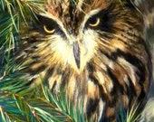 Art Bird Eastern Screech Owl - Giclee Print of My Original Pastel