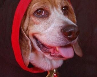 Count Dogula, vampire themed medium dog hoodie