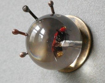 On Sale Marked Down Boxelder Bug Brooch Made With Real Insect In Resin Orb
