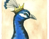 PeaCock King 8x10 hand painted print