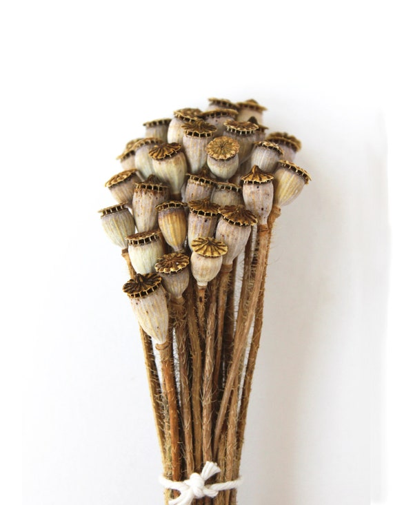 Dried Poppy Pods organic home grown woodland natural rustic brown, rust, cream