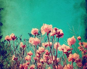 Pink Flowers Fine Art Photography Print