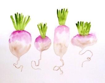 Kitchen Art, Vegetable Art, Turnips, Watercolor Print, Garden painting, illustration, Botanical art, gardener gift, Valentines sale, LaBerge