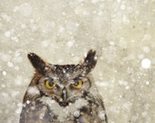 Owl print, winter photography, beige, neutrals, falling snow, snowflakes, natural history, anthropologie, great horned owl