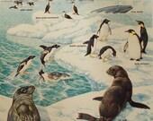 Life in the Antarctica Vintage Origianl Print Number 751 - iowajewel