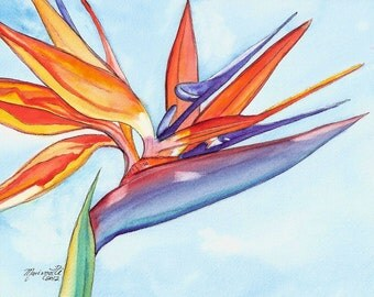 Bird of Paradise in the Sky  8x10 art print from Kauai Hawaii  Kauai sky blue orange tropical