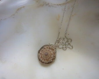 "Silver Wire wrapped Sundial Shell with 18"" Chain-Free Shipping"
