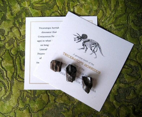 TRICERATOPS TEETH - Authentic Dinosaur Fossil Bone Tooth - Stocking Stuffer
