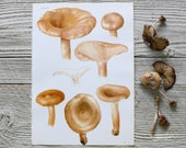 Vintage Mushroom Print  1960 Frameable Botanical Book Page Original Art Bookplate Illustration