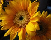 Sunflower Bouquet Photo -Yellow Flower -Gifts for Her -Golden -Sunny Side Up -Sunflower Gifts -11x14 Colorado Fine Art Photograph - JulieMagersSoulen
