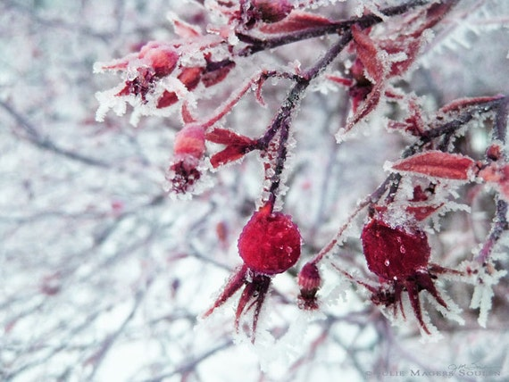 fine art photography of winter landscape