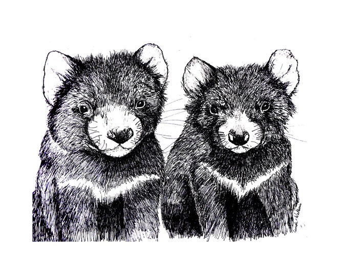Tasmanian Devil  Original pen and ink  By Cindy Watkins print on post card.