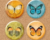 """SALE Butterfly Magnet Set of 4 - 1.25"""" 1-1/4 inch"""