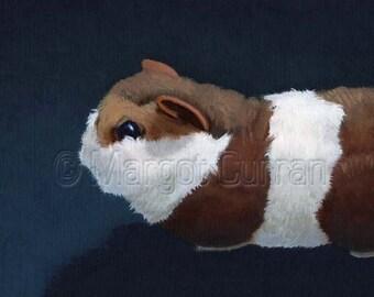 Guinea Pig postcard 6-pack