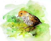 Original Watercolor Bird in 8x10