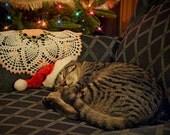 50 Postcards Sleeping Santa Daisy Kitty Cat Kitten Art Photo Christmas Holiday Greeting Cards
