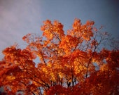 Autumn Nature Holga Photo, Colors, Colorful Fall Photography Print, Brooklyn New York in the Fall